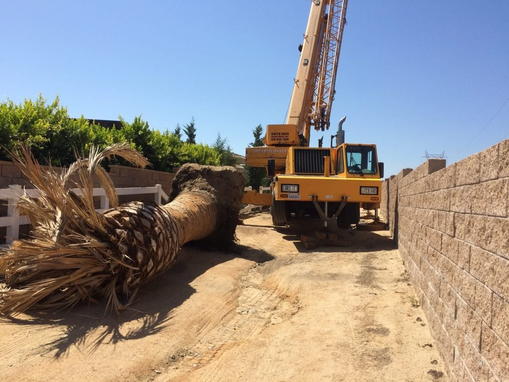 palm tree removal with a crane