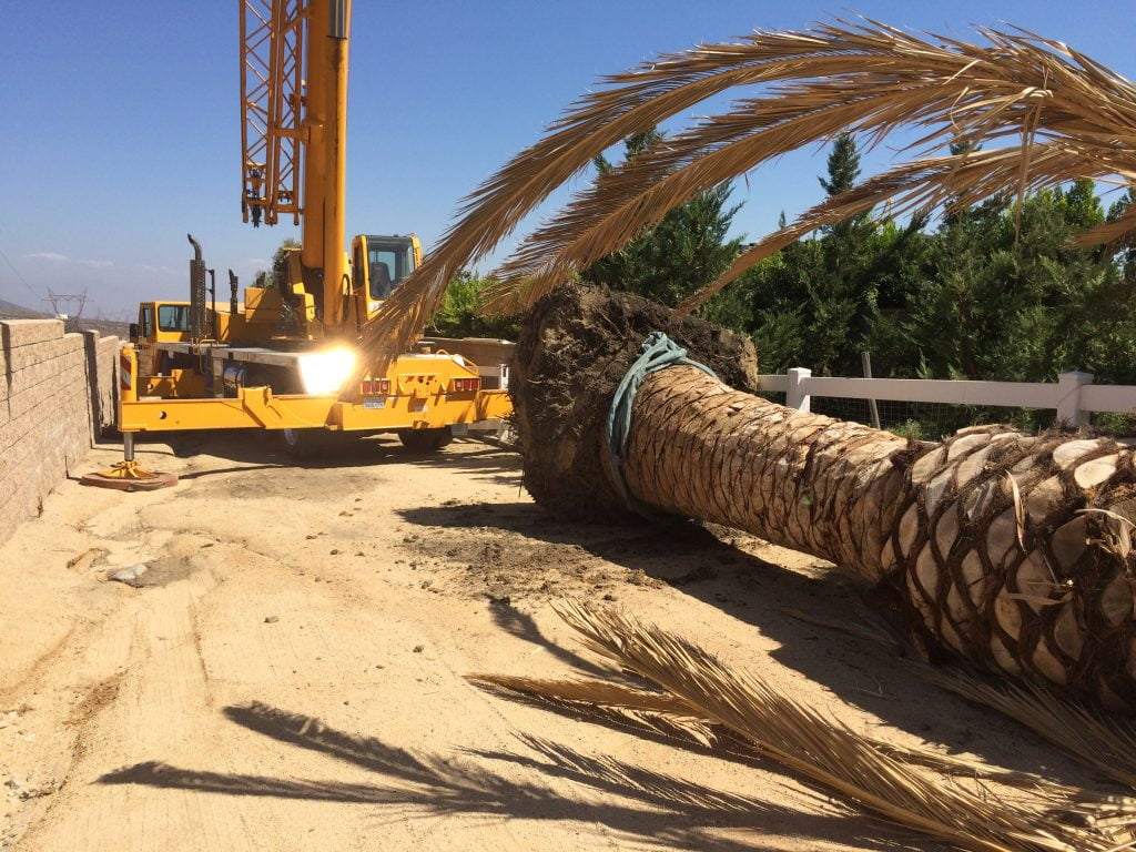 rental crane for palm tree removal and installation